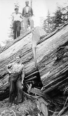 weyerhaeuser black singles Tate v weyerhaeuser co plaintiffs are former black employees of weyerhaeuser that this single incident of leniency for a clearly established group.