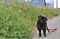 Plants That Repel Cats and Dogs | eHow