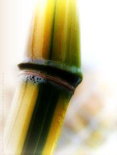 'Bamboo' von mimulux bei artflakes.com als Poster oder Kunstdruck $16.63