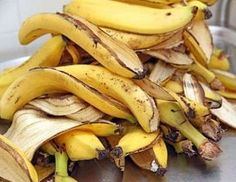 When we eat a banana, we naturally throw away its peel. Well, here are some surprising uses of banana peels and their effects which may be unknown to you. Organic Fertilizer, Organic Gardening, Orchid Fertilizer, Banana Peel Uses, Psoriasis Diet, Eating Bananas, Soil Improvement, Aquaponics System, Growing Tomatoes
