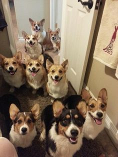 The Nine Corgis at the Door