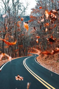 Fall, Lovely Fall!