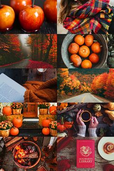 "call-me-winter-soldier: "" Autumn 2016 aesthetic (more) """