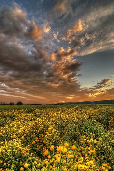 ✯ Valley Wildflower Sunset - Virginia