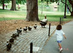 Boston Commons  Make Way for  Duckling's Sculpture...a favorite childhood book by Robert McCloskey
