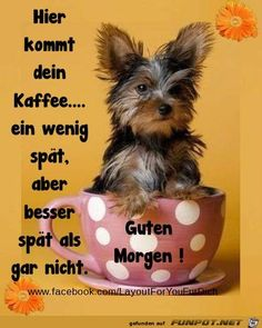 jpg'- Eine von 1467 Dateien in der Kategorie '… funny picture & # coffee.jpg & # – One of 1467 files in the category & # good morning pictures & # on FUNPOT. Good Morning Picture, Morning Pictures, Photo Frame Design, Picture Comments, Dance Quotes, Yorkie, Emoticon, Funny Pictures, Humor
