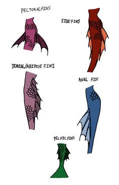 Fairy Tale Rejects Concept Art: Mermaid Tail Fins by Jakegothicsnake Mermaid Tail Fin, Mermaid Art, How To Draw Mermaid, Anime Mermaid, Tattoo Mermaid, Vintage Mermaid, Art Reference Poses, Drawing Reference, Art Sketches