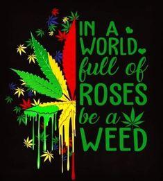 Always be the Weed weedplants silverhaze lemonkush pinkkush purplehaze weed🍁 weeddaily inspire ganjagirls weedgirls stonergirls california roses rose strawberrycough cannabiscommunity Stoner Quotes, Weed Quotes, Weed Memes, Stoner Art, Weed Humor, Stoner Room, Cannabis, Marijuana Art, Arte Dope