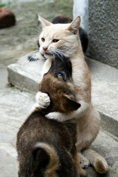 No importan las diferencias lo importante es permanecer unidos :) ¡Buenos días!