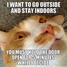 25 Funny Animal Pictures Of The Day - Funny Animal Quotes - - 25 Funny Animal Pictures Of The Day Funny Animals Daily LOL Pics The post 25 Funny Animal Pictures Of The Day appeared first on Gag Dad. Best Cat Memes, Funny Animal Memes, Cute Funny Animals, Funny Cute, Cute Cats, Funny Memes, Hilarious, Funny Captions, Sarcastic Memes