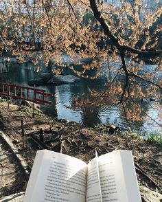 """bookbaristas: """" Central Park reads  More NYC shots coming to ya today!! ✨ """""""