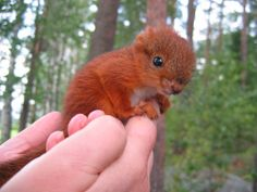 I see your baby animals and match with a baby squirrel The Animals, Baby Animals Pictures, Cute Animal Pictures, Cute Baby Animals, Funny Animals, Animal Babies, Cutest Animals, Wild Animals, Funny Pictures