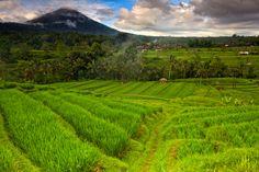 Jatih Luwih Rice Terrace by Helminadia Ranford, via 500px