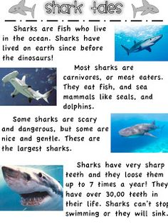 Whales and Sharks