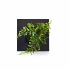 盆栽 bonsai  カップボン Cuobon フレーム sinobu シノブ