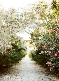 Wandering the sunlit paths..of Charleston~Image by Lindsey Ocker