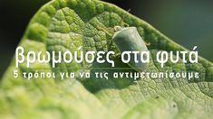 🍅 Ένα από τα πιο συχνά προβλήματα στον κήπο είναι οι βρωμούσες, τη στιγμή που ωριμάζουν τα λαχανικά μας έρχονται οι βρωμούσες και τα καταστρέφουν. Στο σημερινό βίντεο, θα δούμε 5 φυσικούς τρόπους για να τις αντιμετωπίσουμε και να προστατέψουμε τα φυτά μας από τις ζημιές.