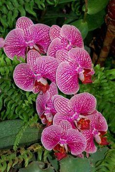 Royal Flora Ratchaphruek, Thailand - Only Orchids: November 2006