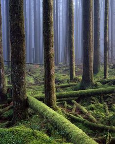 forest in Golden Ears Provincial Park, British Columbia, Canada. Most trees are now close to 100 years old. photo by Adam Gibbs Beautiful World, Beautiful Places, Beautiful Forest, Beautiful Scenery, Amazing Places, Cool Pictures, Cool Photos, Tree Forest, Magical Forest