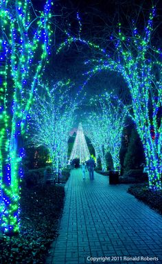gorgeous green and blue lights wrapped around trees at atlanta botanical gardens during christmas time