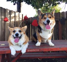 Be it lover or friend we think Valentine's Day is just about spending time with someone you love.  #HappyValentinesDay #FromYourFavoriteGoobers #GeorgiesRalphImpressionIsGettingScaryGood  #RalphandGeorge #ralphthecorgi