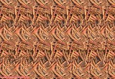 Visit this page to see free stereogram pictures and to know more about Magic Eye and stereogram. Here you will find many nice free stereogram pictures. Hidden 3d Images, Hidden Pictures, Magic Eye Pictures, 3d Pictures, 3d Stereograms, Eye Illusions, Illusion Pictures, Eye Tricks, Magic Eyes