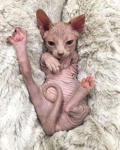 Nackte Katze es sie mehr