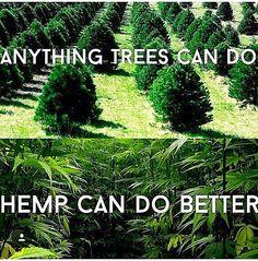 #weedstagram #kushporn #cannabis #cannagrow #meds #dank #420 #moeflokush #stoner #pot #iwillmarrymary #marijuana #cannabisculture #danknation #cannabiscommunity #stoned #cannabisqueenz #pothead #stonernation #potheadsociety #weedwithoutlimits #andthenigothigh #ganja #bong #instaweed #weedstagram420 #blunt #oregon #aeroponics by hempheadglobal