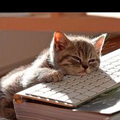 Cute Cat | Cute Pets & Animals