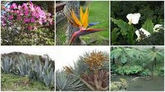 Kuvahaun tulos haulle azorit Plants, Plant, Planets