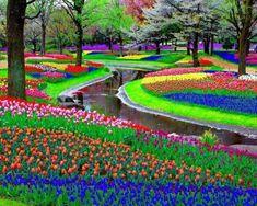 Gambar Taman Bunga Musim Semi (Spring)