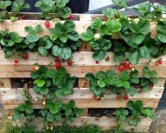 Pallet strawberry plants strawberry plants - The Gardenerspallet strawberry planter - My Gardening PathInspiring DIY Ideas: 15 Inspiring DIY Pallet Garden Planter Ideas Amazing Creative Wood Pallet Garden Project Ideas - Garden and Simp Vegetable Garden Design, Diy Garden, Garden Planters, Garden Beds, Garden Projects, Pallet Planters, Pallet Gardening, Garden Pallet, Vegetable Gardening