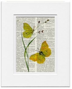 vintage botanical butterfly artwork  - printed on page from old dictionary