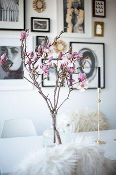Magnolia (via Bloglovin.com )