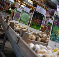Amsterdam...flower market Amsterdam Flower Market, Stuffed Mushrooms, Vacation, Vegetables, Flowers, Photography, Food, Stuff Mushrooms, Vacations