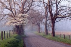 Morning mist...Great Smoky Mountains. #GreatSmokyMountains - Google+