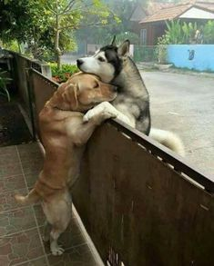 This makes me think of Blue and Hige's reuniting scene in the anime Wolf's Rain. Such a cute couple...