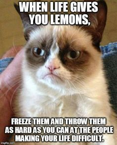 Grumpy cat, grumpy cat meme, grumpy cat humor, grumpy cat quotes, grumpy cat funny …For the best humour and hilarious jokes visit cat