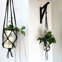 Hanging plants  Ampel