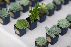 Midnight blue and green succulent plants wedding favors