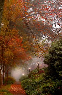 Autumn Mist - I love the lamps in the mist with the beautiful fall foliage. Fall Pictures, Pretty Pictures, Autumn Scenes, All Nature, Jolie Photo, Beautiful Landscapes, Beautiful World, Simply Beautiful, Autumn Leaves