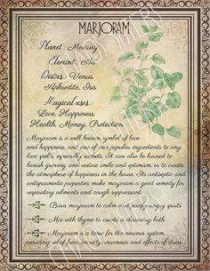 Printable Herbs Book of Shadows Pages Set Herbs & Plants Correspondence, Grimoire Pages, Witchcraft, Wicca, Printable BOS Wicca Herbs, Witchcraft Herbs, Green Witchcraft, Witchcraft Spells, Magic Herbs, Herbal Magic, Wiccan Spell Book, Wiccan Spells, Magick Book