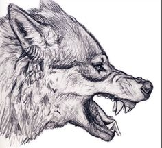 Detailed angry wolf