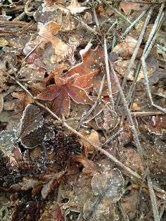 ~Autumn~ Night frost now stipples the fallen leaves by day . . .