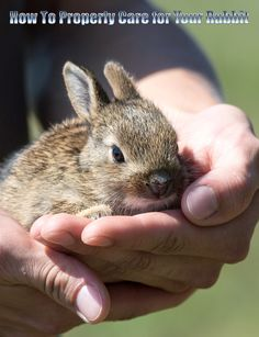 How To Properly Care for Your Rabbit. A rabbit enclosure is called a hutch. Your #rabbit needs enough room to make three or four full hops, to figure out.. #pets