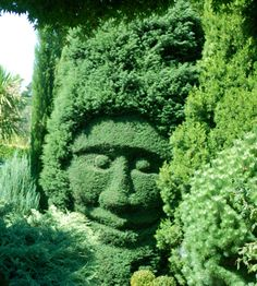 Shapes into the hedge