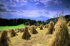 Mislinjska Valley, Slovenia   by slovenia.info