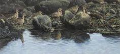 alan m hunt Bird Paintings, Photorealism, Wildlife Art, Bird Prints, Bird Art, Natural World, Nature, Image, Animals