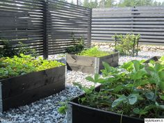 puutarha,piha,istutuslaatikko,kasvimaa,viherpiha Home And Garden, Gravel Garden, Plants, Outdoor, Herb Garden, Vegetable Garden, Plant Box, Modern Garden, Vegetable Garden Raised Beds
