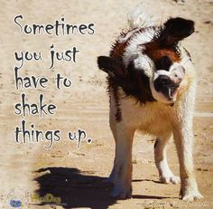 """Weekly Dog Inspiration #5  Inspire your week!  """"Sometimes you have just to shake things up""""  http://worldog.com/weekly-dog-inspiration-5"""